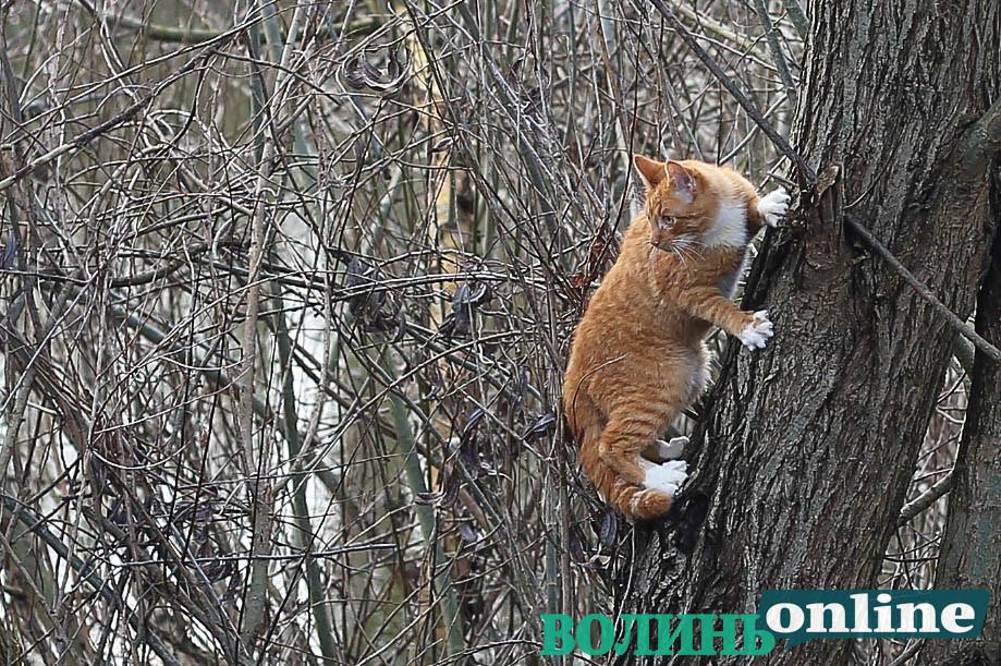 Як у Луцьку живуть коти. ФОТОРЕПОРТАЖ