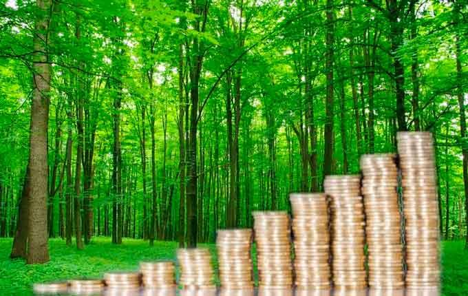 Волинські лісівники поповнили бюджет на 250 мільйонів гривень