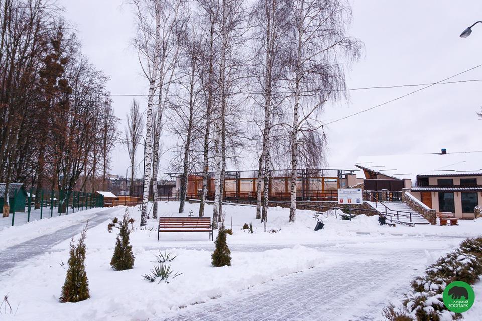 Засніжений Луцький зоопарк. ФОТО