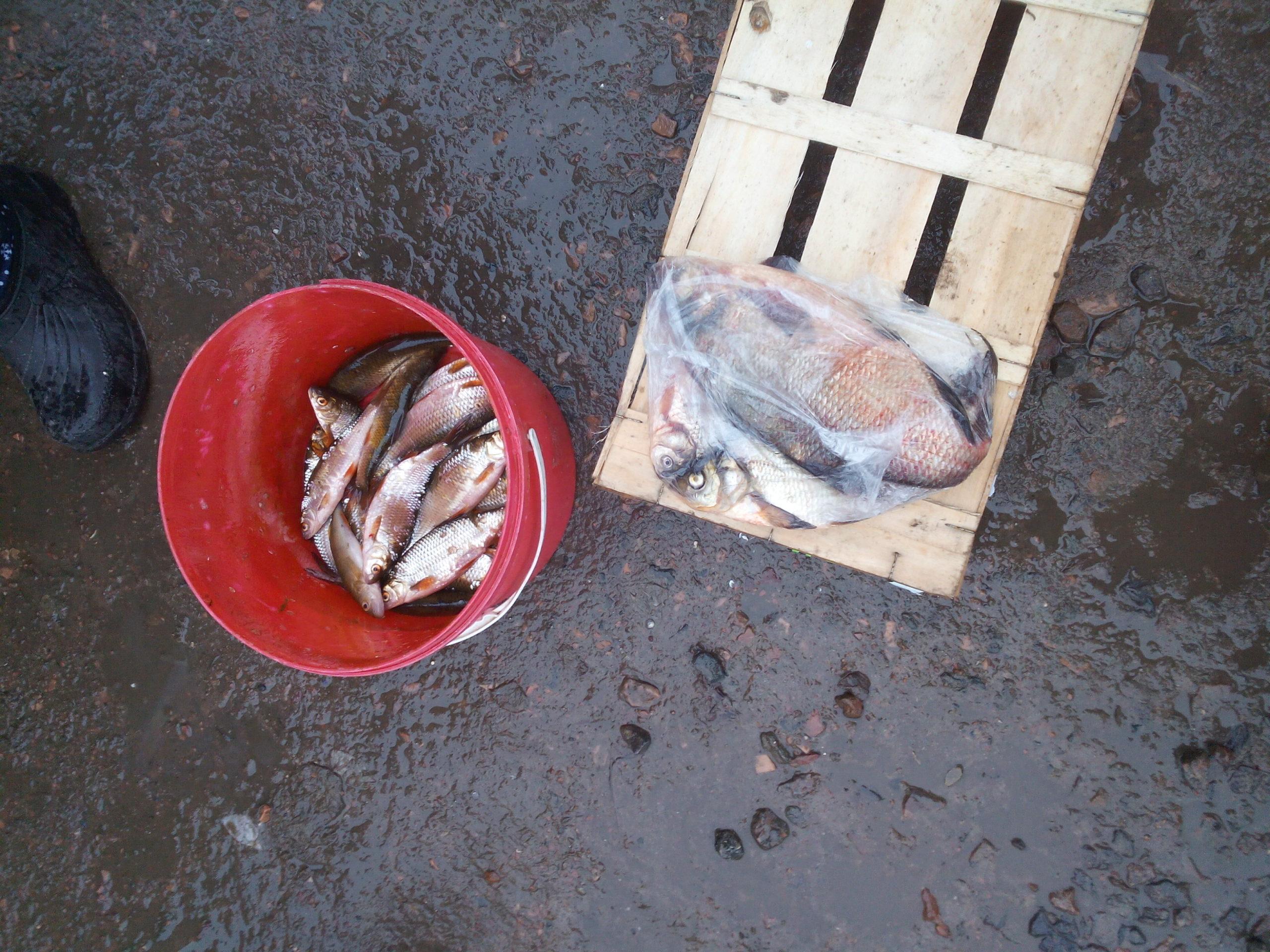 На Волині зловили рибних браконьєрів. ФОТО
