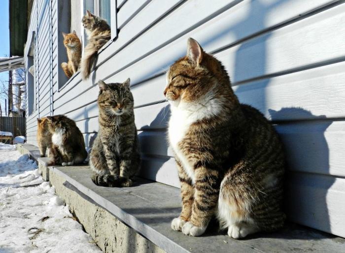 У Луцьку просять зробити стерилізацію котів та собак безкоштовною