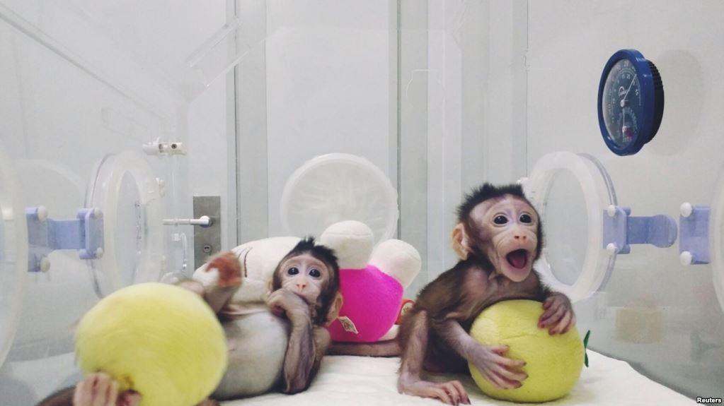Вчені вперше клонували мавпу
