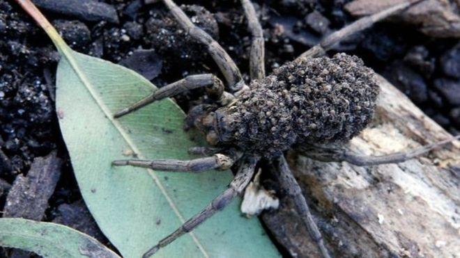 Чоловік у Каліфорнії через павука спалив квартиру