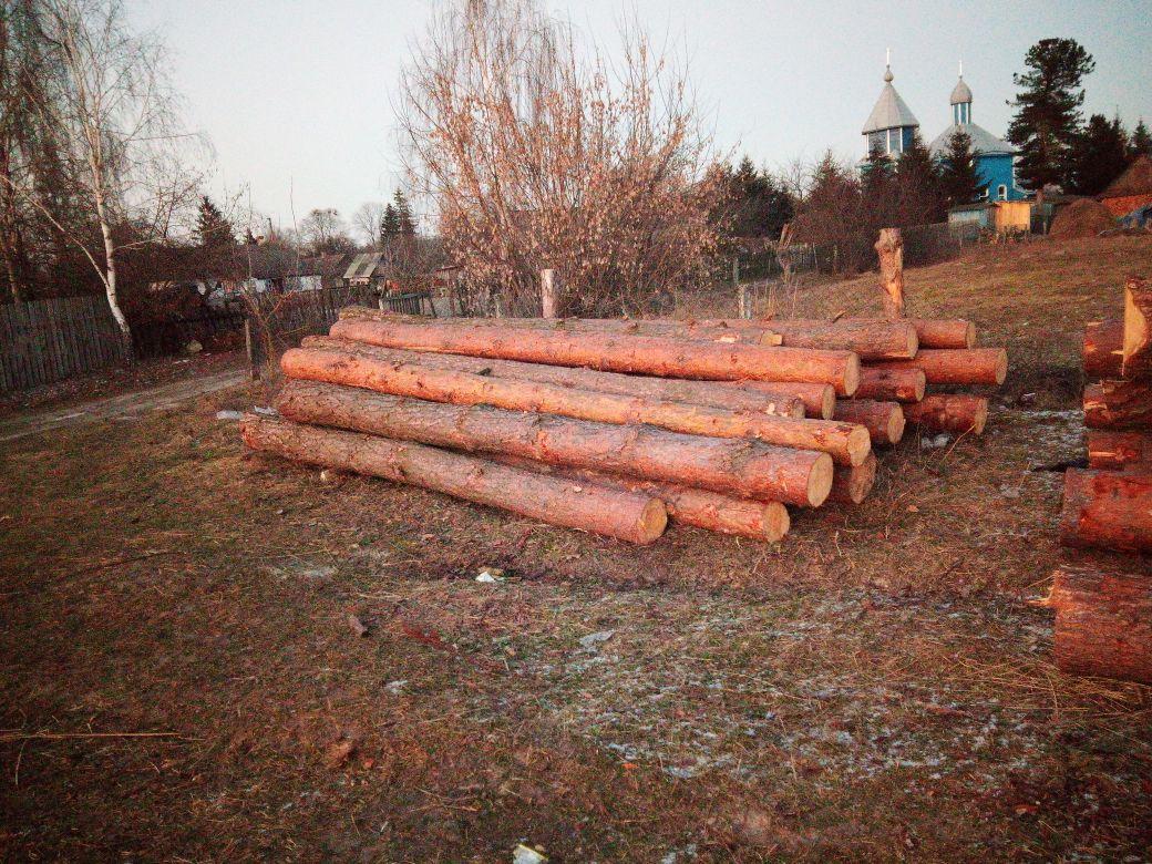 У Ратнівському районі лісова охорона виявила «нічийну» деревину