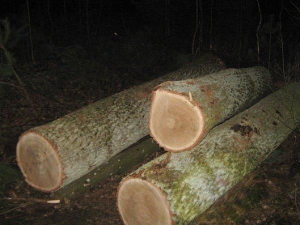 На Волині лісопорушники загородили дорогу колодами і втекли від лісівників
