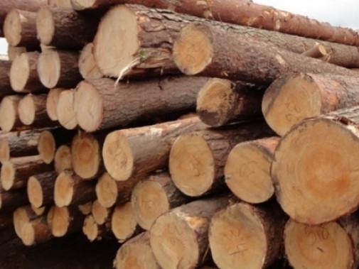 На Волині затримали трактор із сумнівною деревиною