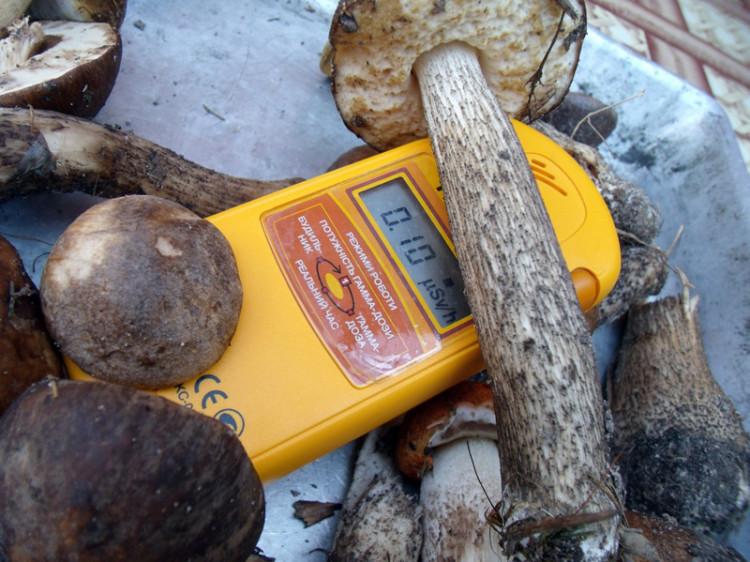На Волині у грибах виявили перевищення норми радіації