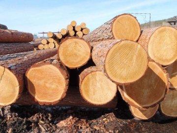 Повідомили деталі затримання трактора із деревиною на Волині
