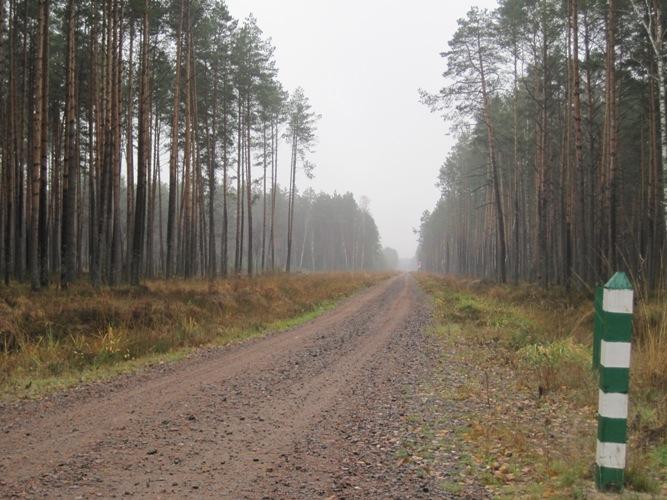 Як на Волині будують лісові дороги. ВІДЕО