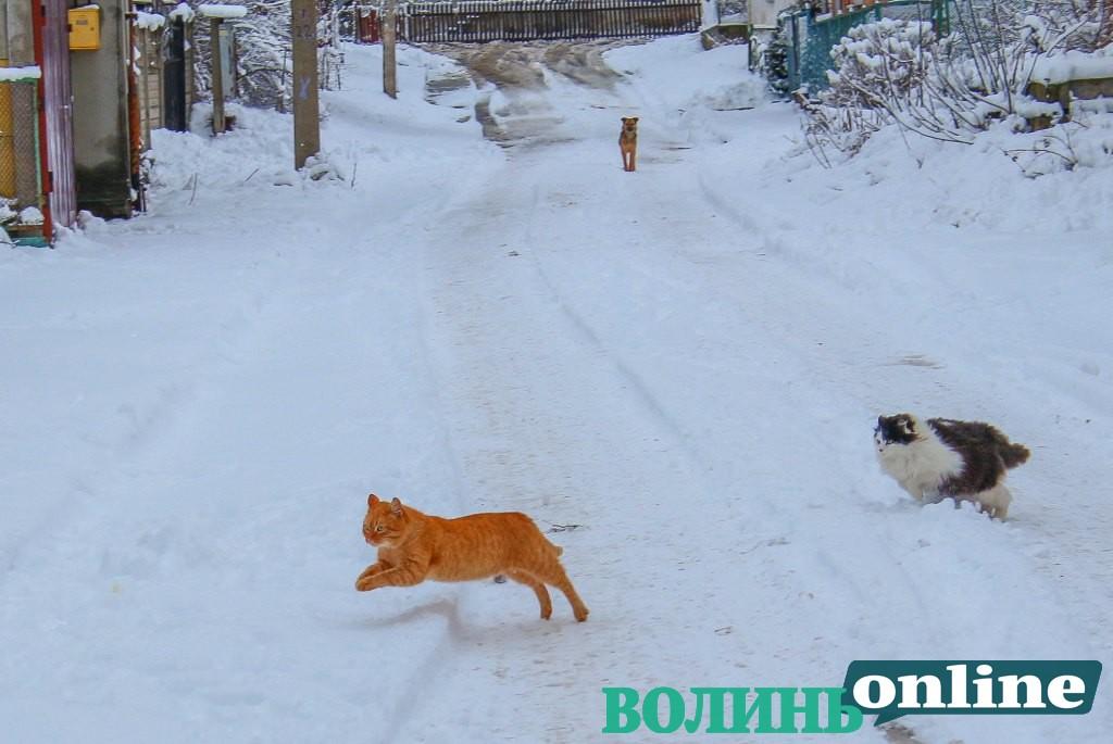 Зимовий Луцьк. ФОТОРЕПОРТАЖ