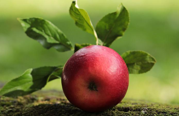 Україна збільшила експорт яблук до Європи