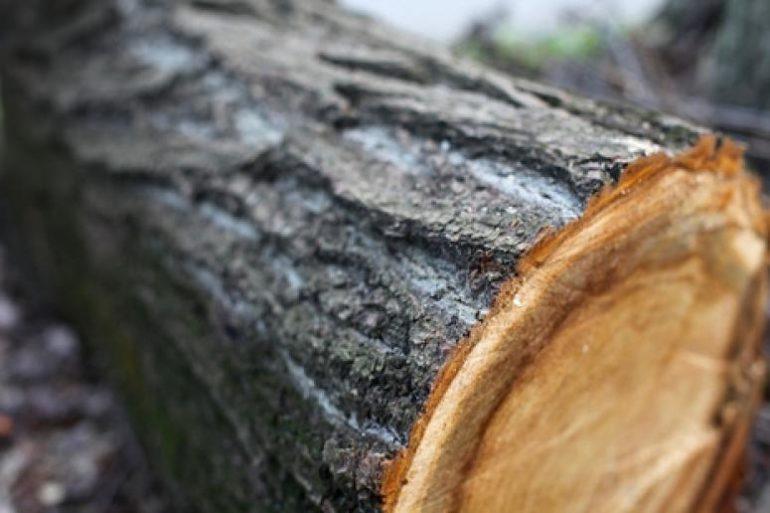 Волинянина покарали за незаконну вирубку лісу