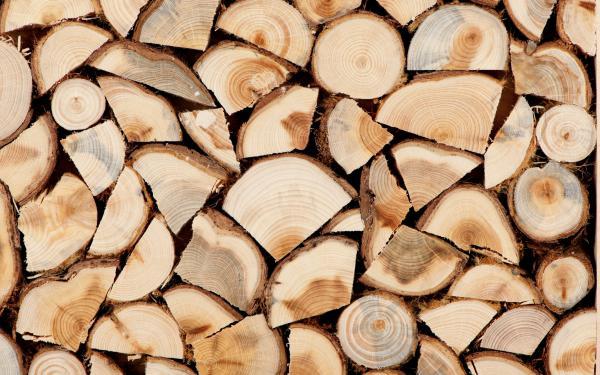 Держлісгоспи Волині наростили об'єми продажу дров паливних