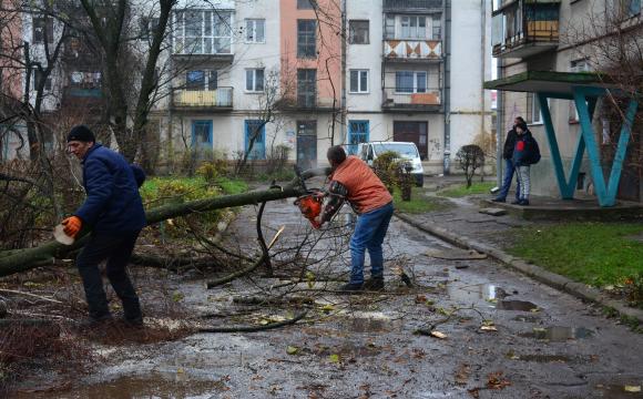 У Луцьку можуть витратити майже півмільйона гривень на видалення дерев