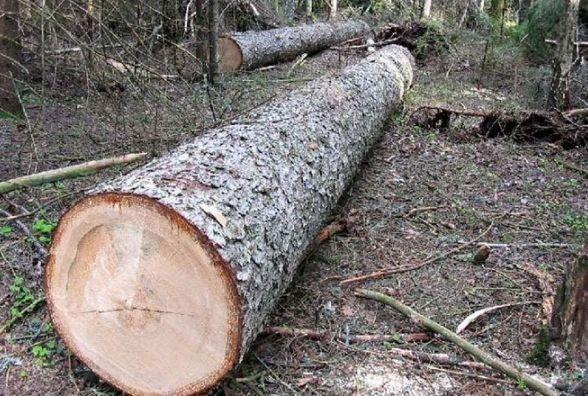 На Волині затримали лісопорушника