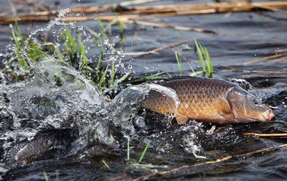 З початку квітня на Волині заборонили ловити рибу у зв'язку з нерестом