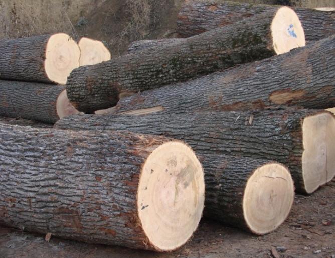 На Волині чоловік викрав із лісу 14 колод дуба та вільхи