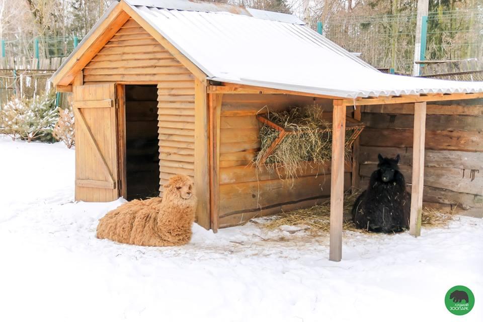 Останні зимові пейзажі у Луцькому зоопарку. ФОТО