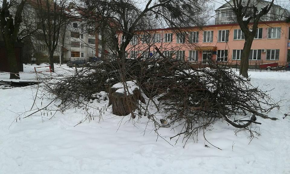 Лучани почали масово кронувати дерева і «забувають» прибрати гілля. ФОТО