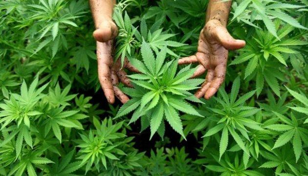 Канада улітку легалізує марихуану