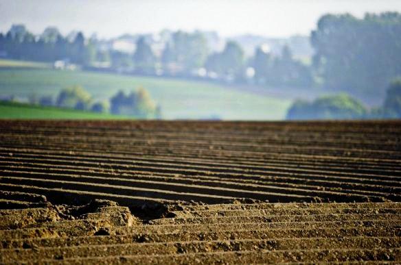 На Волині орендаря змушують повернути державі земельну ділянку