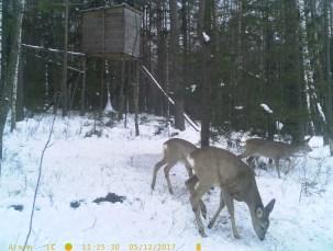 Бачить навіть уночі: на Волині від бракон'єрів у лісах встановили камери