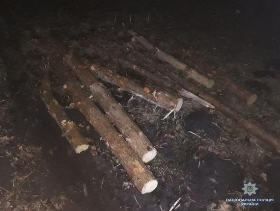 На Волині затримали крадіїв деревини