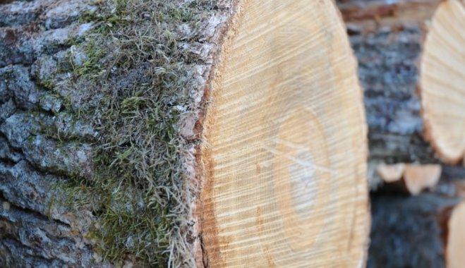 Волинянину за крадіжку лісу загрожує кримінальна відповідальність