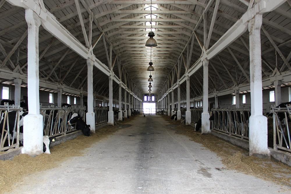 На Волині реконструюють ферму на понад півсотні голів великої рогатої худоби