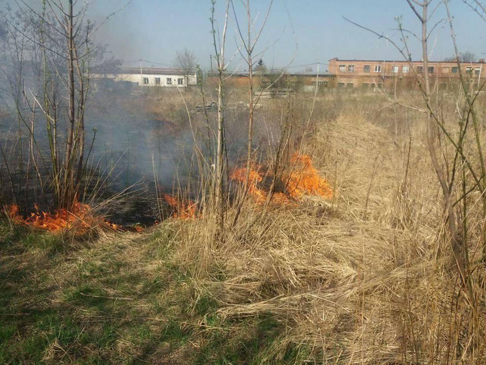 Луцькі муніципали піймали чоловіка, який підпалив суху траву. ФОТО