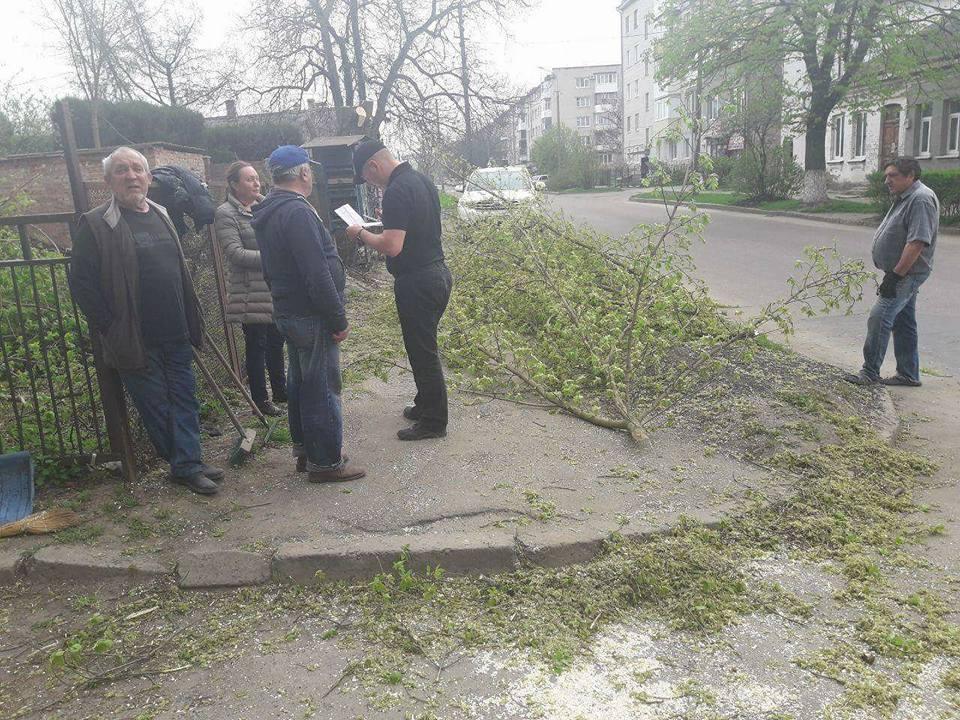 У Луцьку покарали порушників, які кронували дерева без дозвільних документів