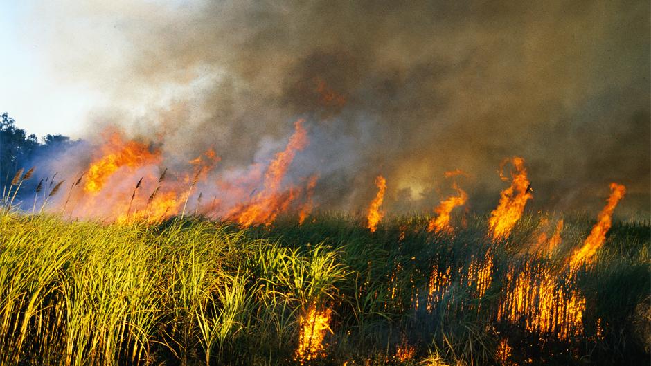 На Волині розпочався пожежонебезпечний період