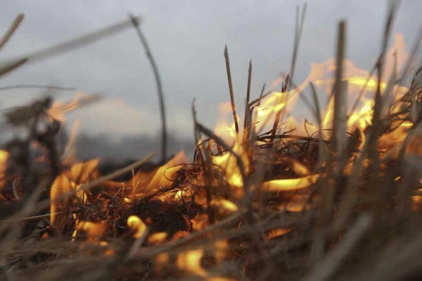 Лісівники просять волинян не палити сухої трави