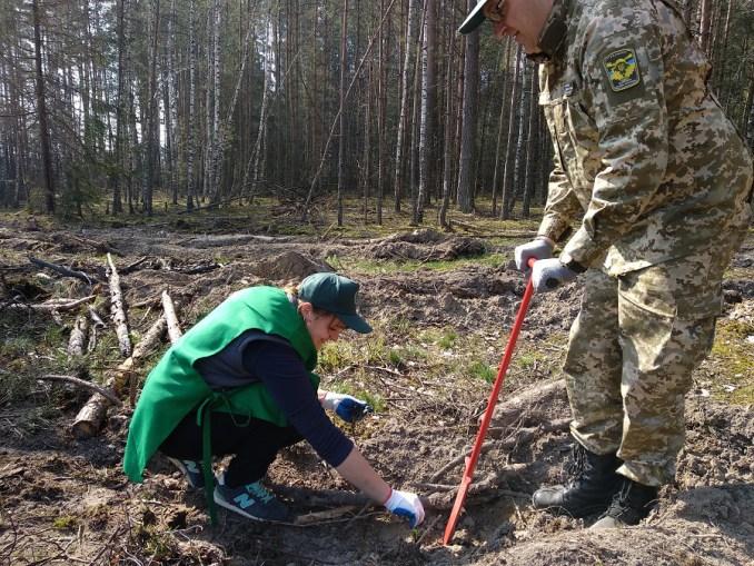 Лісівники та працівники «Цуманської пущі» разом садили ліс. ФОТО