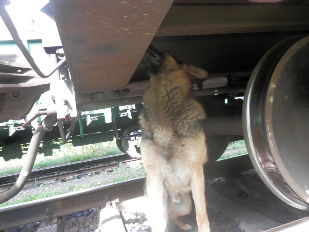 На Волині прикордонники виявили у вантажному потязі контрабандні сигарети