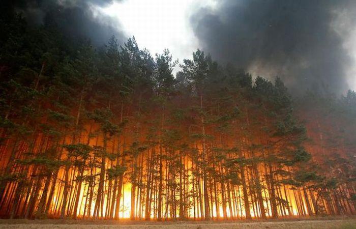 Волинян закликають не провокувати пожежі у природних екосистемах