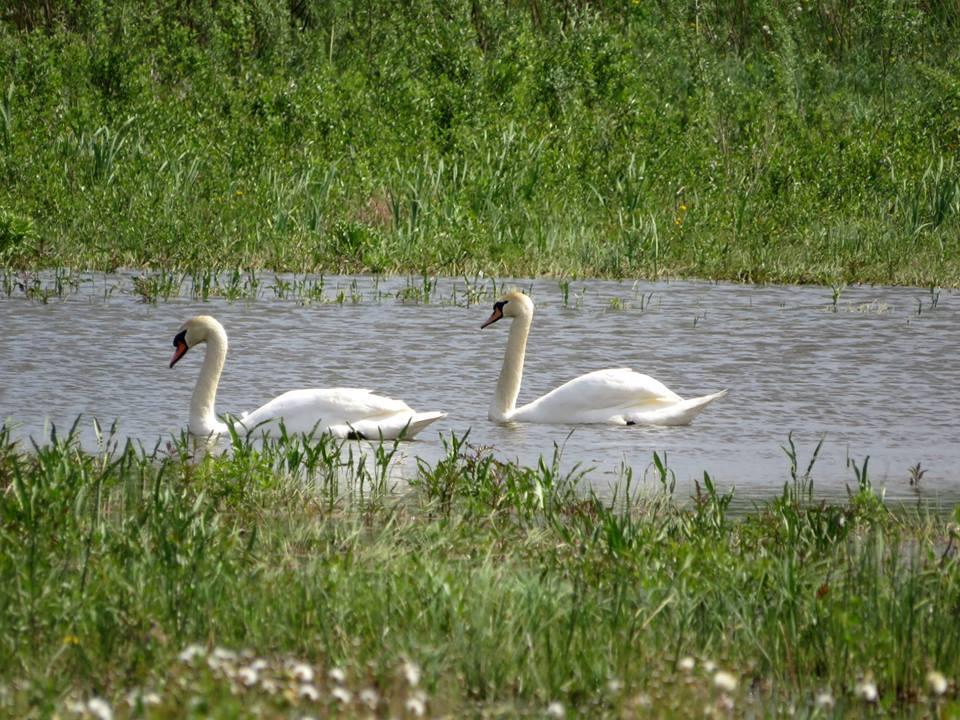Школярі Прилуцького досліджували, які птахи живуть на берегах водойм. ФОТО