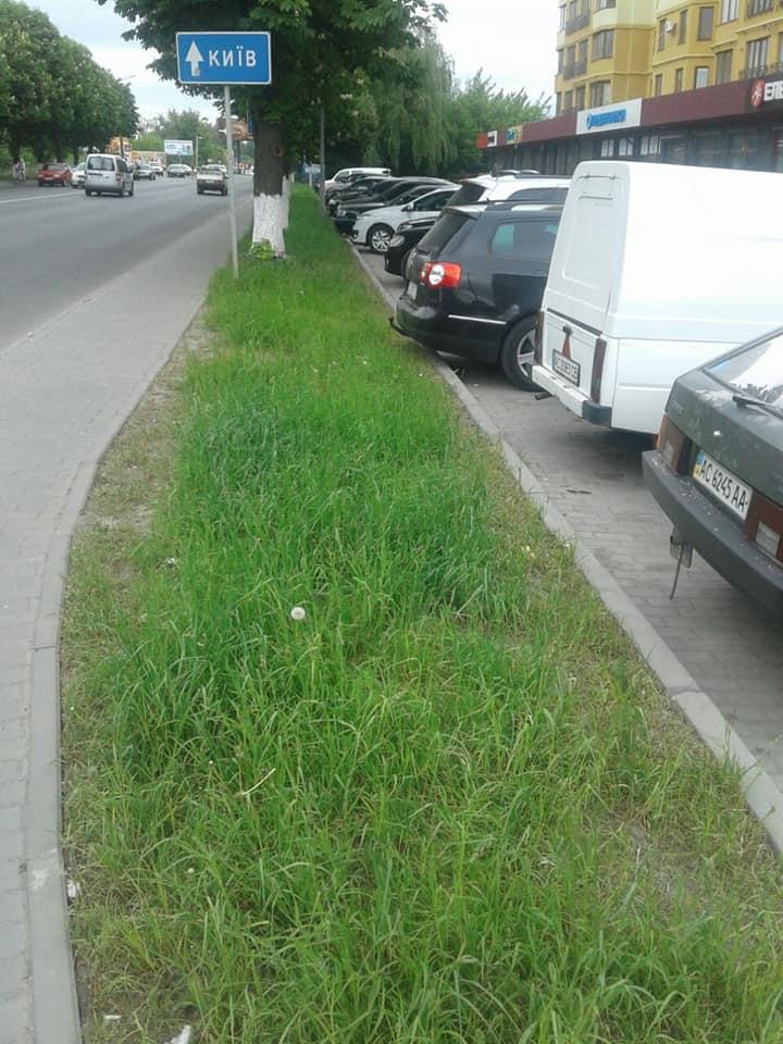 Муніципали просять лучан покосити траву