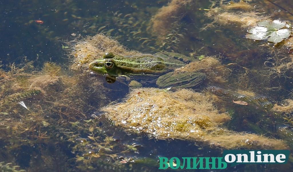 Весняний парк Луцька. ФОТОРЕПОРТАЖ