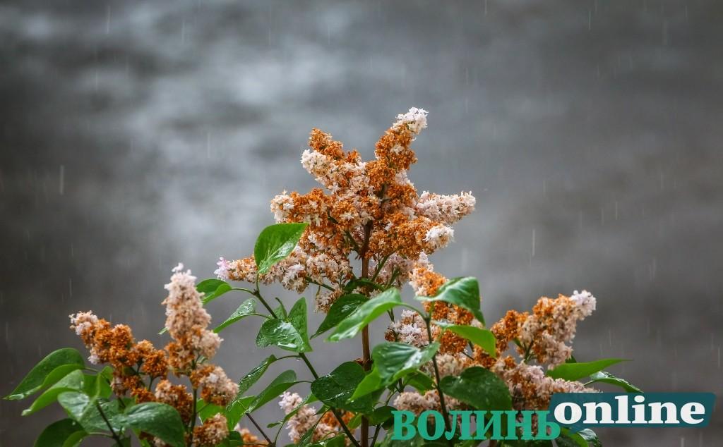 Довгоочікуваний дощ у Луцьку. ФОТОРЕПОРТАЖ