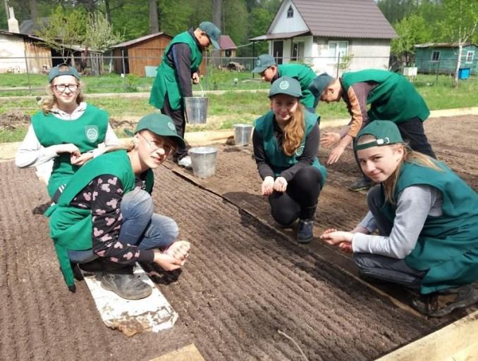 Колківські лісівники зі школярами висіяли насіння сосни