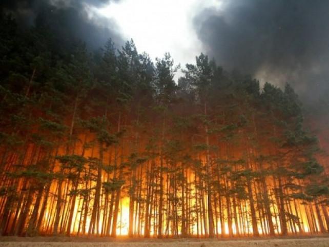 Волинян закликають не провокувати пожежі у екосистемах