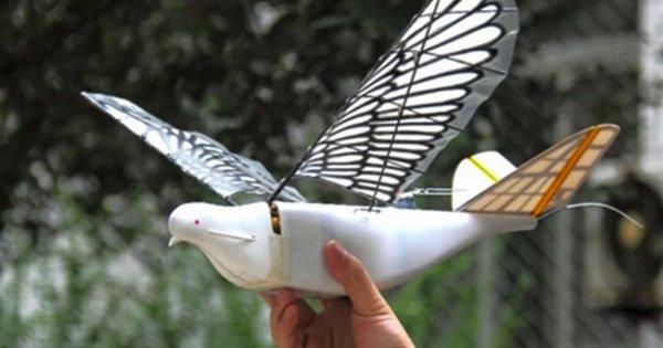 У Китаї з'явилися військові дрони, що імітують поведінку голубів