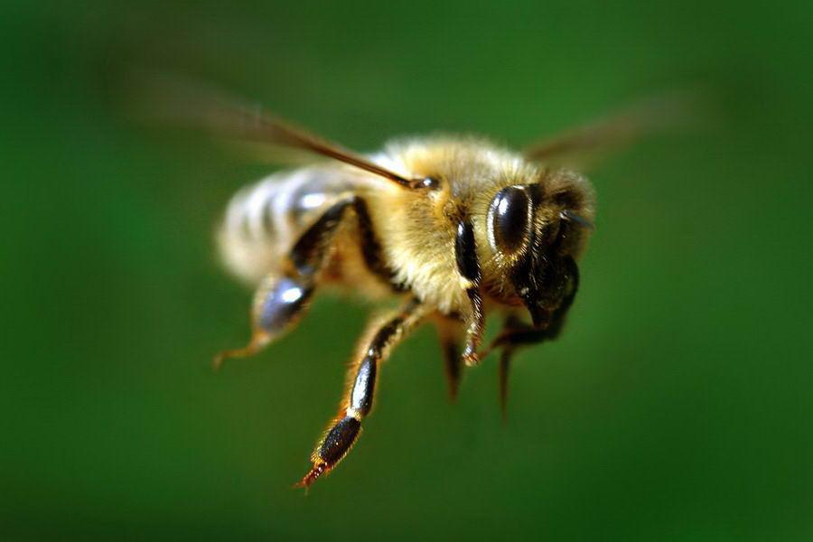 В Еквадорі через напад бджіл зупинили футбольний матч