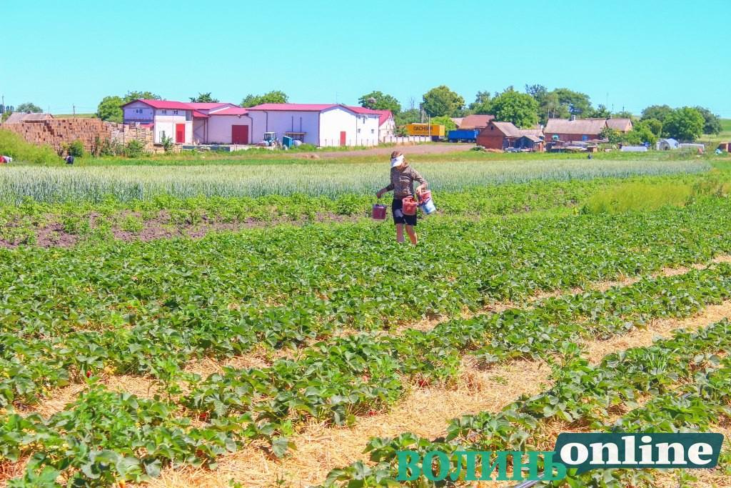 Як найбідніше село Луцького району перейняло досвід польських аграріїв
