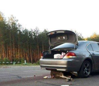 На Волині автомобіль збив лося, водій втік. ФОТО 18+