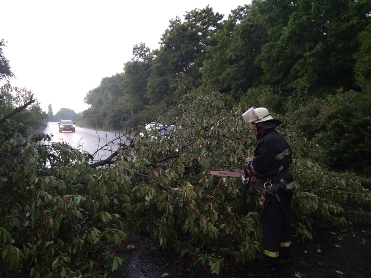 На Волині негода наламала дерев