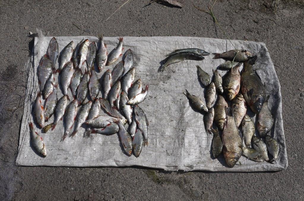 На Волині затримали браконьєра, який незаконно ловив рибу. ФОТО