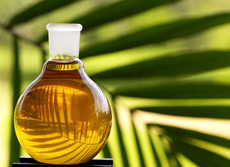 ЄС відмовиться від пальмової олії в якості палива до 2030 року