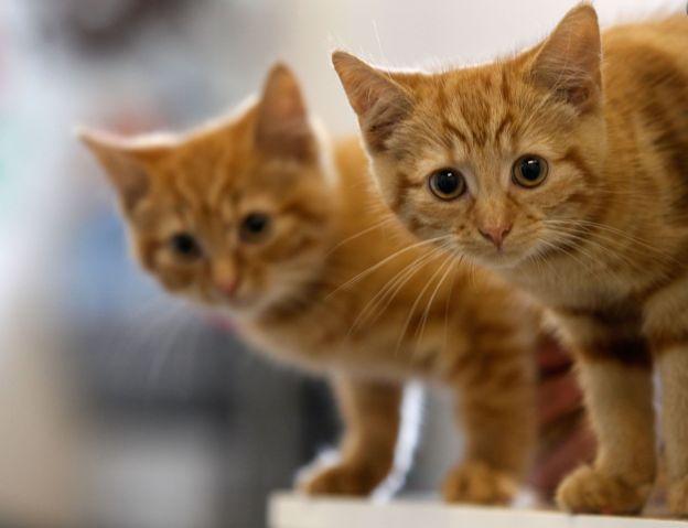 Складна правда про те, чому коти муркочуть